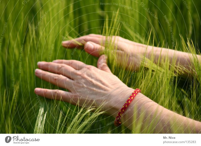 feel Mensch Frau Natur grün Sommer Hand Gefühle Gesundheit 2 Feld Energiewirtschaft Kraft Finger weich Streifen berühren