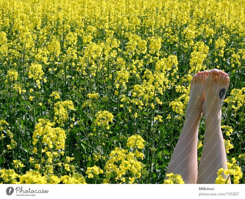 untergetaucht Natur grün Pflanze Ferien & Urlaub & Reisen Ernährung gelb Erholung Blüte Frühling Fuß Landschaft Beine Feld Lebensmittel Ausflug Energiewirtschaft