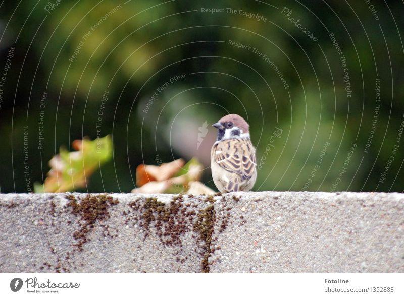 Was ist? Umwelt Natur Tier Vogel 1 frech frei klein nah natürlich Spatz Mauer Farbfoto mehrfarbig Außenaufnahme Menschenleer Tag Licht Sonnenlicht