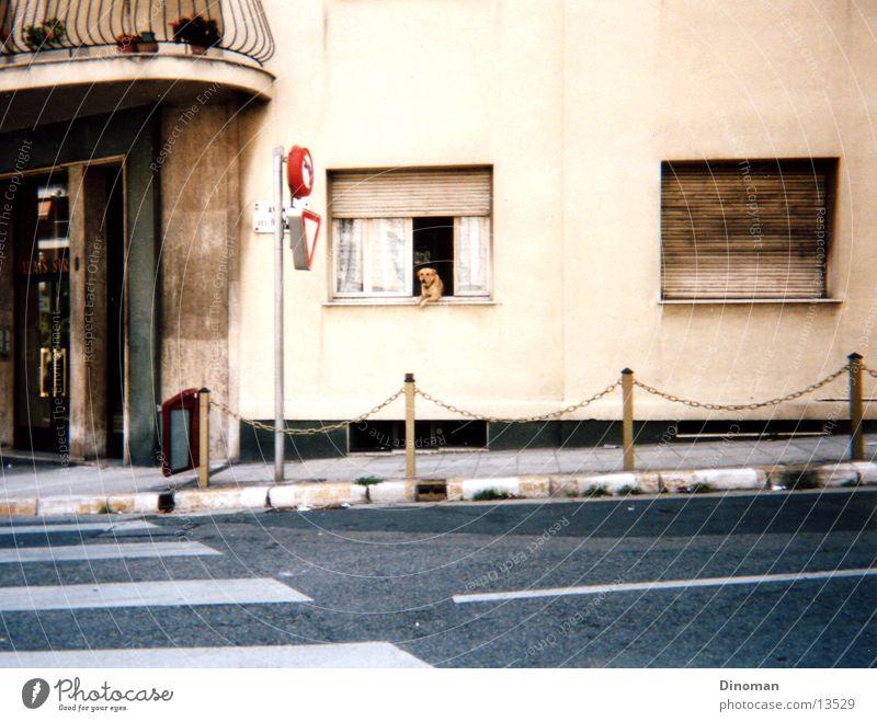 Straßenköter Hund Frankreich Zebrastreifen Fototechnik