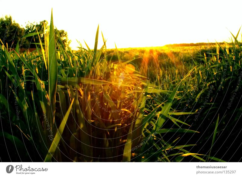 Frühlingskraft Natur Himmel Baum Sonne grün gelb dunkel Gras Wärme hell Feld frei Kraft frisch Physik
