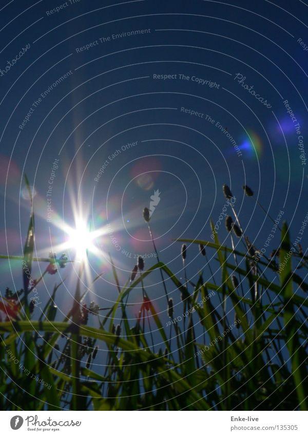 Sonnenstrahlen schön Himmel Sonne grün blau Sommer Erholung Denken Verkehr Halm Maulwurf