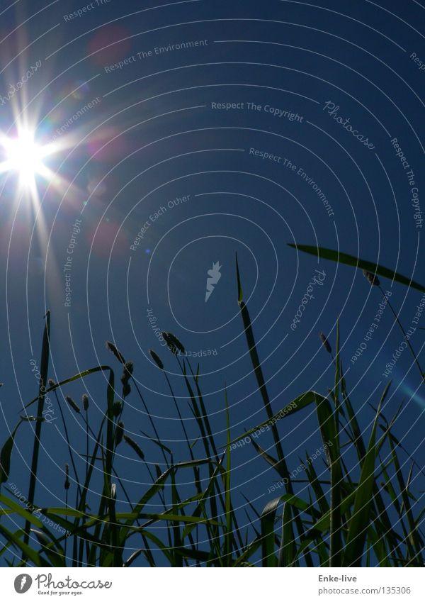 Sonnenstrahlen 1 schön Himmel grün blau Sommer Erholung Denken Verkehr Halm Maulwurf