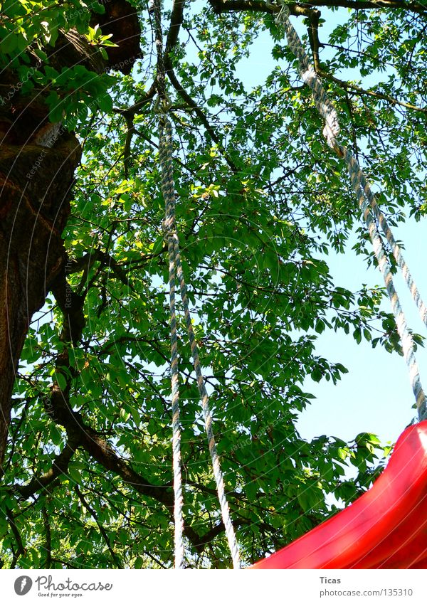 Baumschaukel Himmel Sommer Freude Spielen Garten hoch Schaukel Swing