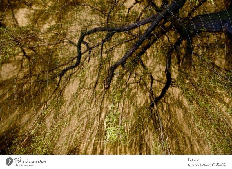 Krone Natur schön Baum grün gelb Frühling Park Denken orange groß hoch Ordnung stark Dynamik erhaben betonen