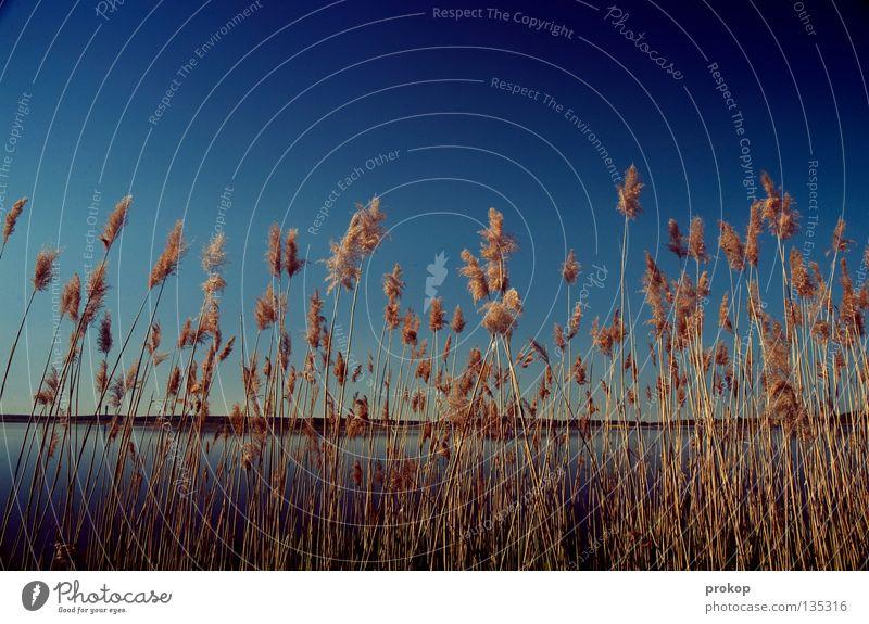 Softcopy II Natur Wasser schön Himmel blau Sommer Freude Ferien & Urlaub & Reisen ruhig Ferne Erholung Frühling See Wärme Luft Küste