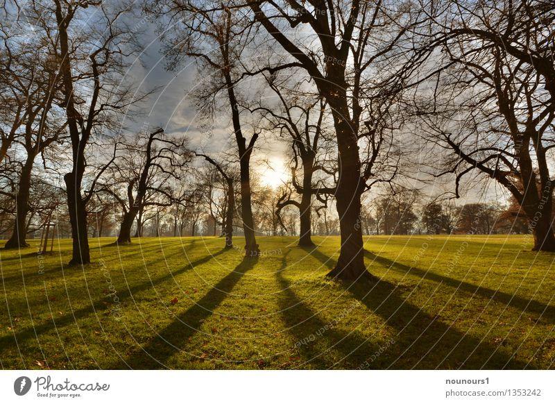Wintersonne Natur Landschaft Pflanze Sonne Sonnenaufgang Sonnenuntergang Sonnenlicht Wetter Schönes Wetter Baum Gras Park Wiese dunkel blau braun grau grün