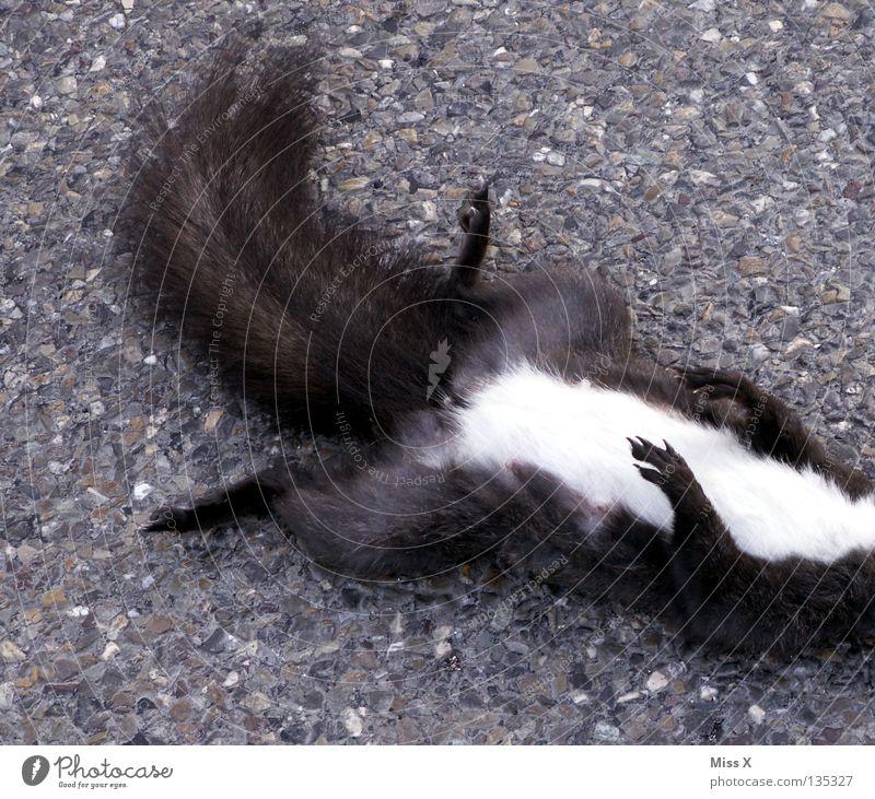 *zensiert Farbfoto Außenaufnahme Straße Autobahn Fell Pfote Stein schlafen Traurigkeit braun Trauer Tod Verzweiflung Ende Eichhörnchen Straßenbelag steinig