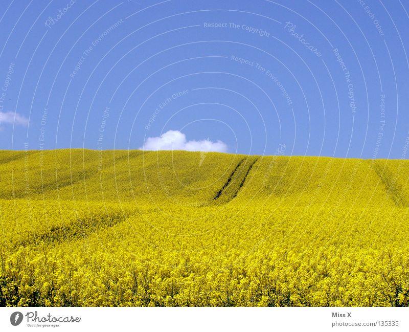 gelber Hügel Farbfoto Außenaufnahme Textfreiraum oben Textfreiraum unten Ausflug Sommer Wellen Berge u. Gebirge Natur Pflanze Himmel Wolken Schönes Wetter Blume
