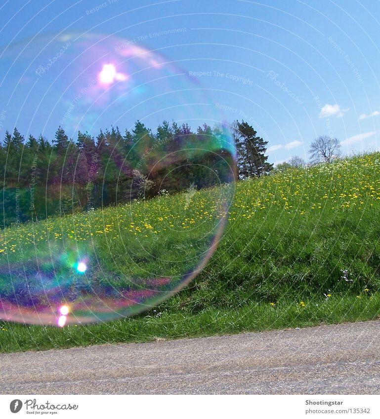 Vom Winde verweht Seifenblase platzen Blumenwiese Wald rund glänzend Sommer Frühling Blase Wege & Pfade