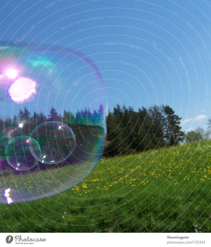 Vom Winde verweht Seifenblase Sommer Frühling schimmern glänzend Blumenwiese Wald Blubbern Sonne