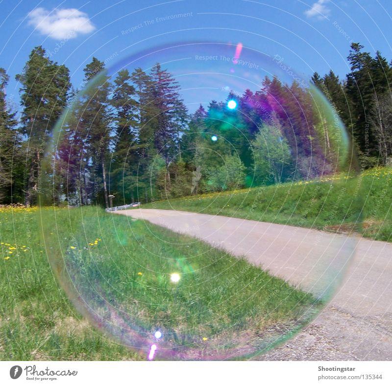Seifenblase Himmel grün blau Wald Wiese Frühling Wege & Pfade glänzend rund Seifenblase