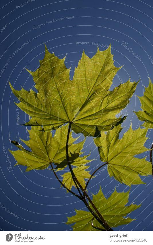 licht 1 Blatt Baum Frühling Sommer Herbst Reflexion & Spiegelung ahron Zweig Ast Himmel Schönes Wetter