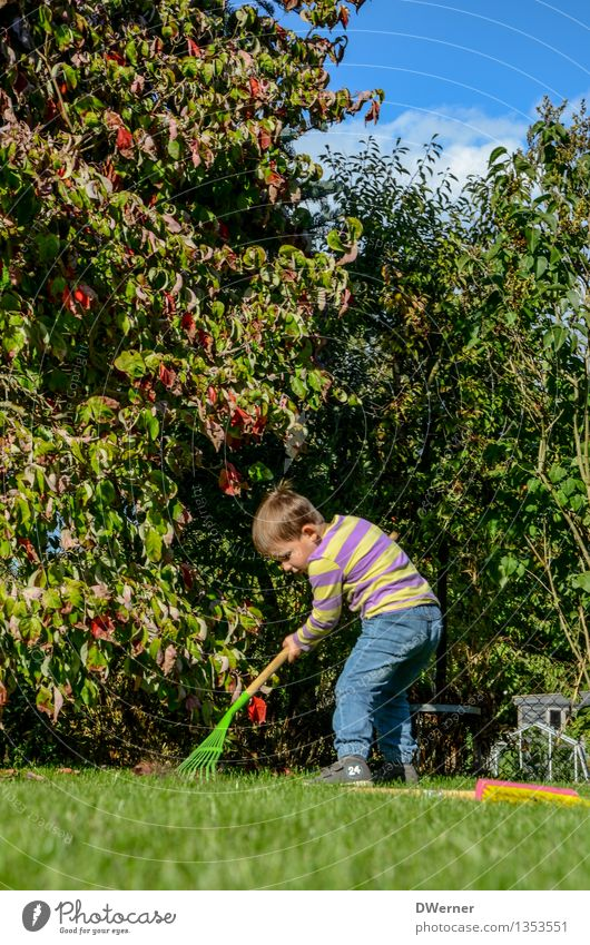 Saisonkraft Mensch Kind Himmel Pflanze grün Baum Blatt Freude Wiese Gras Bewegung natürlich Junge Garten hell Arbeit & Erwerbstätigkeit