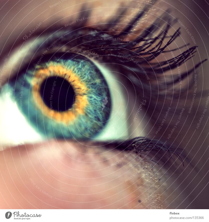 *klimper klimper* Pupille Wimpern Mensch Sinnesorgane Schminke geschminkt Wimperntusche Lidschatten Frau feminin schön Kosmetik betonen Kajal Jugendliche Auge