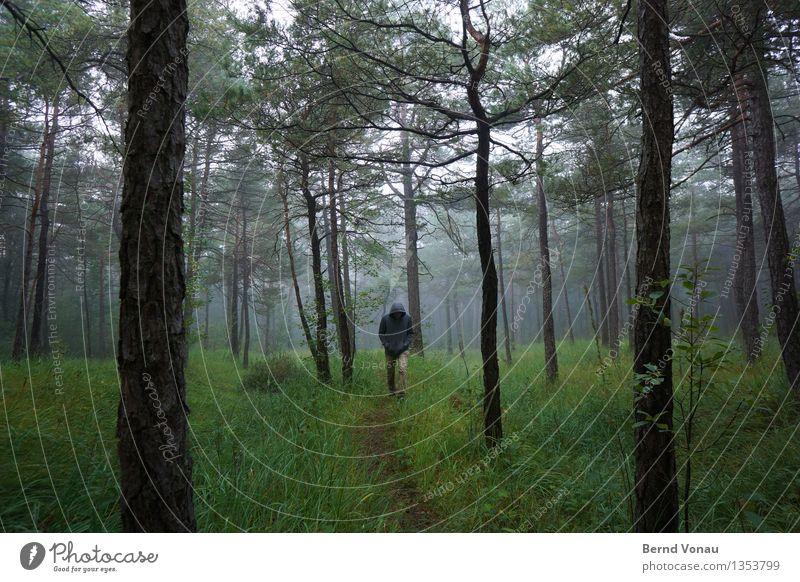 verlaufen Mensch maskulin Mann Erwachsene 1 45-60 Jahre Umwelt Natur Landschaft Pflanze Herbst schlechtes Wetter Nebel Baum Gras Sträucher gehen wandern Gefühle