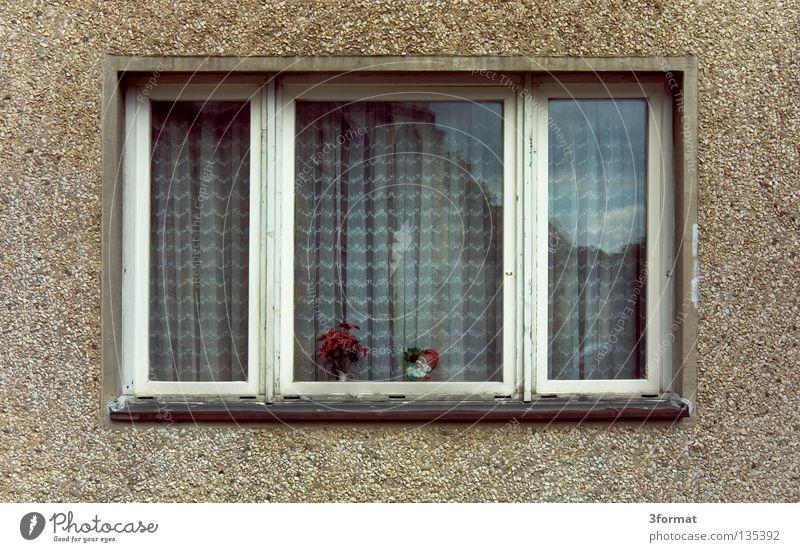 haneu Plattenbau Gebäude Fassade Neubau Neubausiedlung Haus Gardine Blume Pflanze Topfpflanze Fenster Fensterbrett Balkon Hochhaus Raster trist verloren