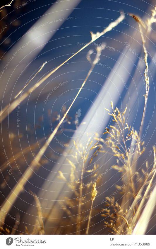 über Umwelt Natur Luft Frühling Sommer Herbst schlechtes Wetter Pflanze Wildpflanze Garten Park Wiese Feld schön trocken Wärme feminin wild weich blau gelb gold