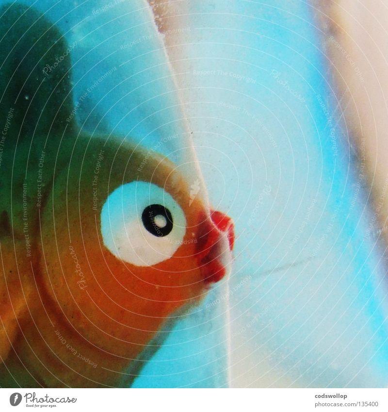 I'm a Celebrity Get Me Out of Here Wasser Fisch Spielzeug außergewöhnlich Kitsch Goldfisch Auge Fischkopf Tierfigur Anschnitt Bildausschnitt Nahaufnahme