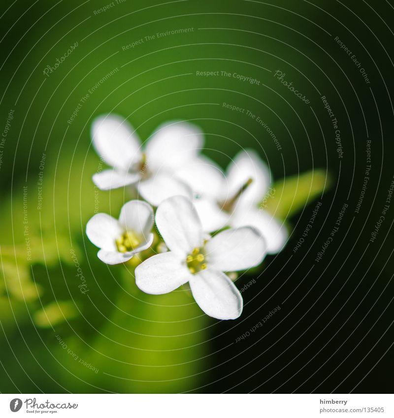 lost in hope Natur Pflanze schön Farbe Sommer weiß Blume rot Blüte Frühling Hintergrundbild Wachstum frisch Vergänglichkeit Hoffnung Trauer