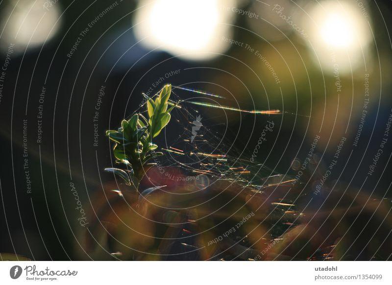 Altweibersommer Umwelt Natur Pflanze Herbst Schönes Wetter Baum Blatt Grünpflanze Wildpflanze Wald ästhetisch Wärme braun mehrfarbig gelb grün rot
