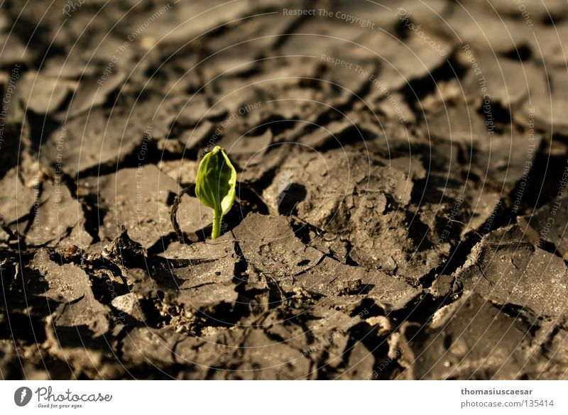 Auferstanden... Natur grün Pflanze Frühling grau Sand braun klein Erde trist Bodenbelag zart stark trocken erleuchten Riss