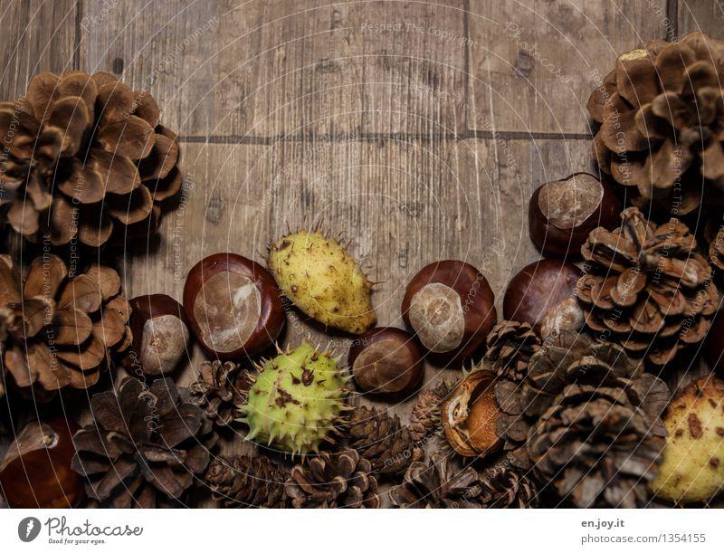 Herbscht Basteln Erntedankfest Holz braun grün Kreativität nachhaltig Natur Wachstum Zapfen Kastanienbaum Schalenfrucht Stachel Herbst Jahreszeiten herbstlich