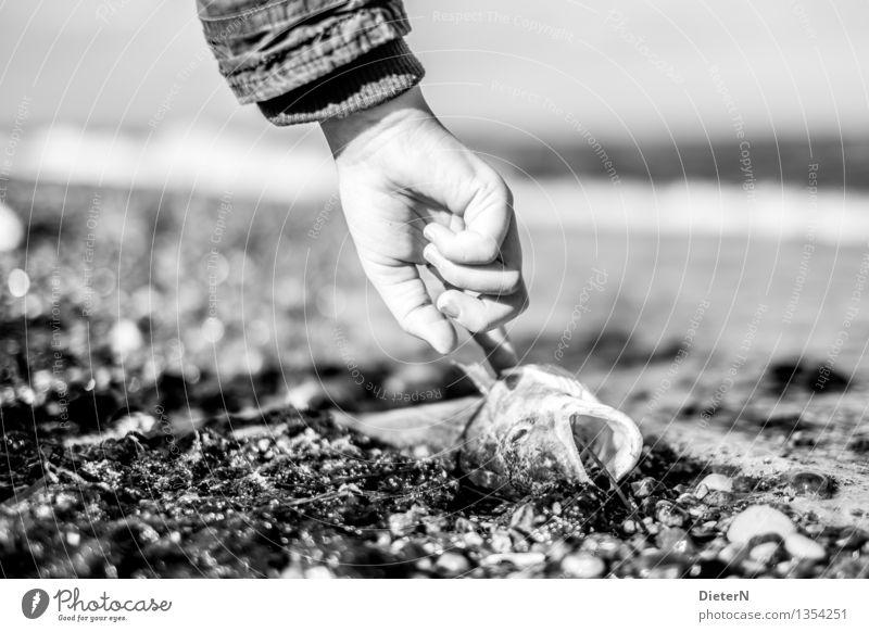 Frisch? Mensch weiß Hand Strand schwarz Auge Küste grau Stein Arme Haut Finger Fisch Algen Totes Tier