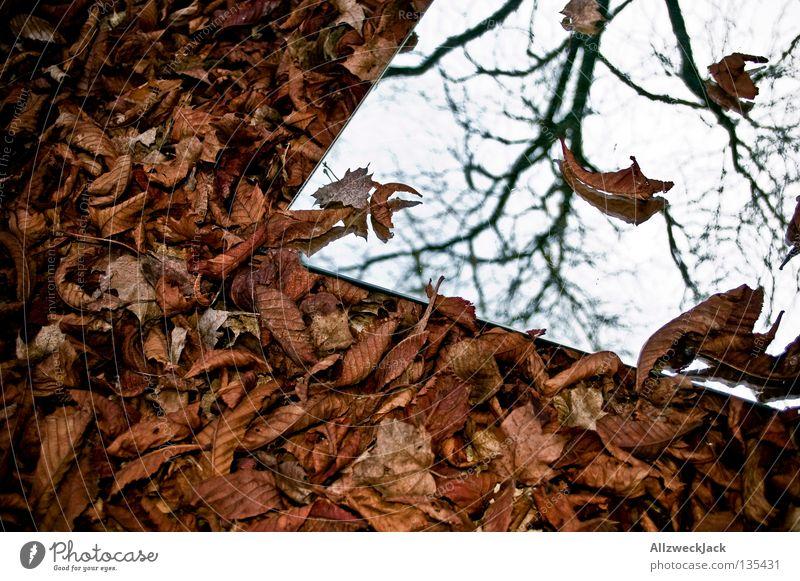 Laub Spiegel Spiegelbild Reflexion & Spiegelung Selbstportrait abgelegen Licht Herbst Wand unklar grau Gemälde Blatt braun welk mystisch Ruhestand selbst parken
