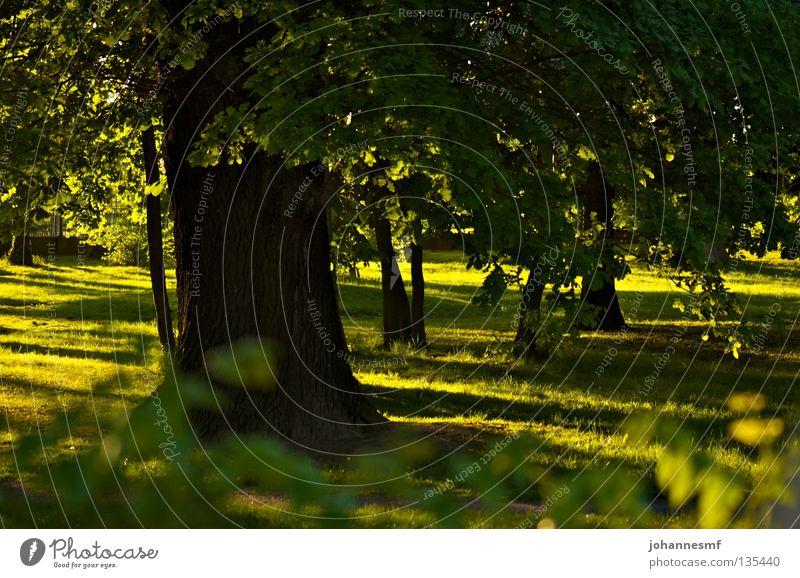 Baum, Sonnenstrahlen und Wiese Frühling Blatt Schatten Baumstamm graß Garten