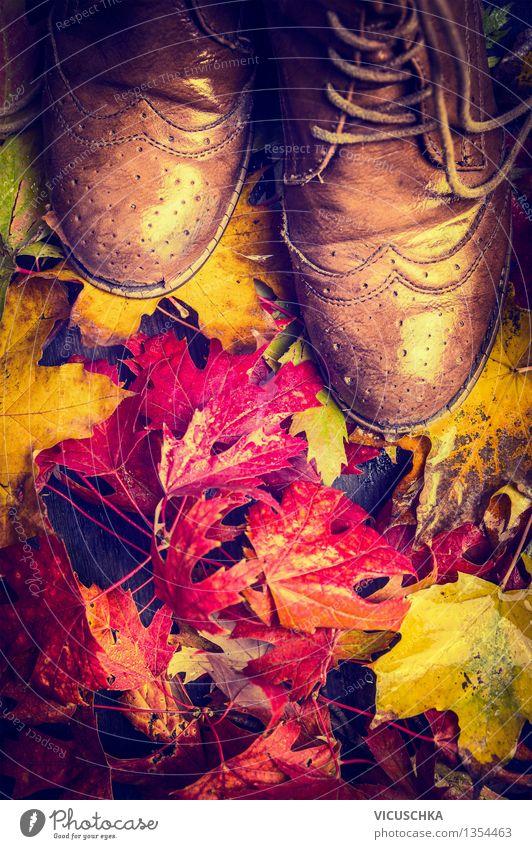 Alte Schuhe auf bunten Herbstlaub Lifestyle Stil Design Garten Mensch Frau Erwachsene Natur Regen Pflanze Baum Blatt Park Wald Mode Stiefel retro gelb