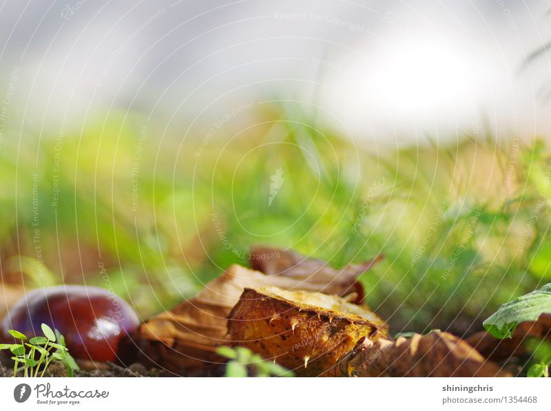 herbst Natur grün ruhig Leben Wärme Herbst Gras grau Garten braun Erde Idylle Schönes Wetter Umweltschutz herbstlich unberührt