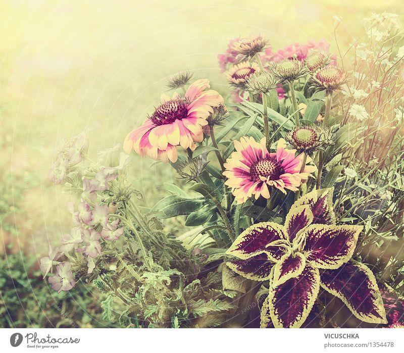 Blumen Garten und Herbstfarben Natur Pflanze Sommer Blume Blatt Blüte Herbst Gras Stil Hintergrundbild Garten rosa Park Design elegant retro