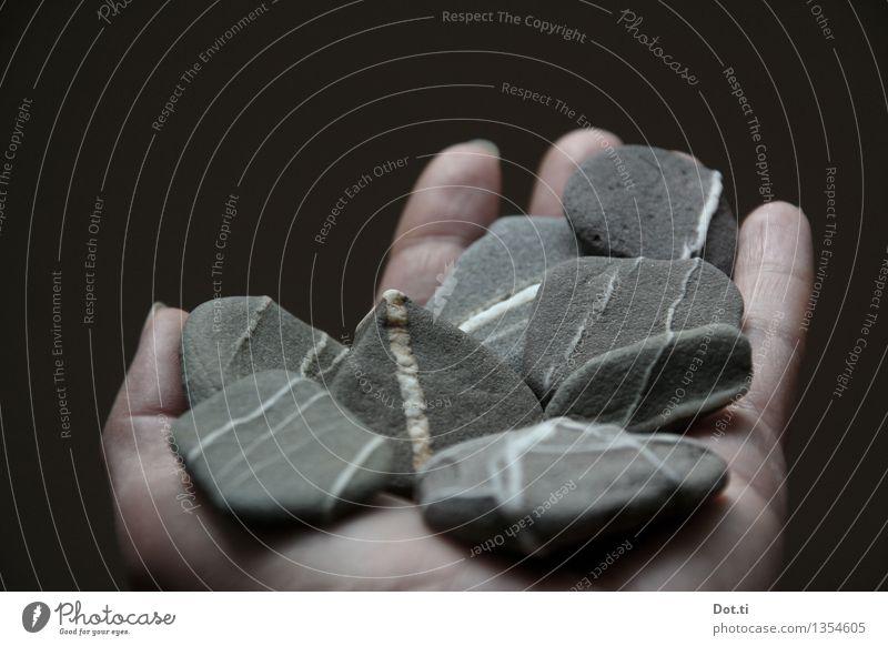 Rheinkiesel Hand Finger Stein Streifen festhalten grau weiß Sammlung Kieselsteine Ader zeigen mehrere Fundstück Farbfoto Gedeckte Farben Innenaufnahme