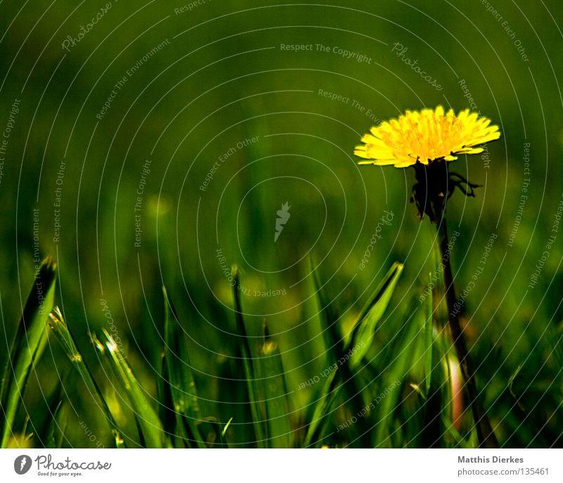 Löwenzahn Hand Himmel Blume grün blau Pflanze Sommer gelb Leben Wiese Blüte Freiheit Luft Wind Finger zart