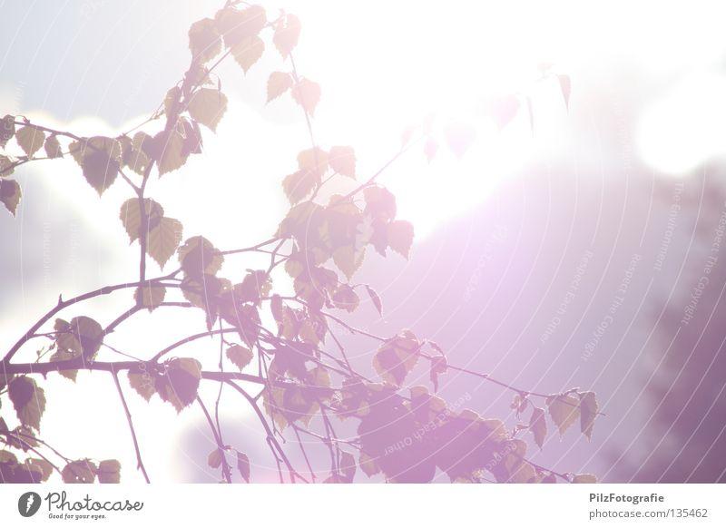 Sommer. Frühling Blatt Baum Apfelbaum Gegenlicht Licht Überbelichtung schön Frühlingsgefühle genießen Freizeit & Hobby Park Physik weiß rot grau Freude