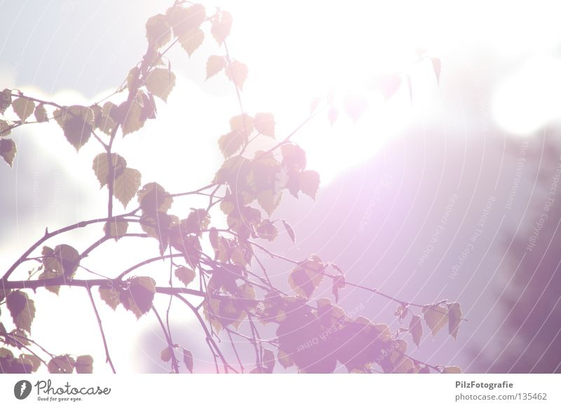 Sommer. schön Himmel weiß Baum Sonne blau rot Freude Blatt Gefühle Frühling grau Park Wärme Freizeit & Hobby
