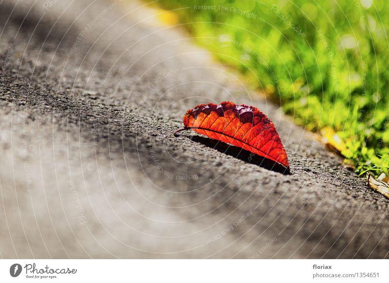 Nahender Herbst Umwelt Natur Pflanze Schönes Wetter alt fallen leuchten liegen Wärme braun grau grün Blatt Asphalt Straße Jahreszeiten Senior Ende dreifarbig