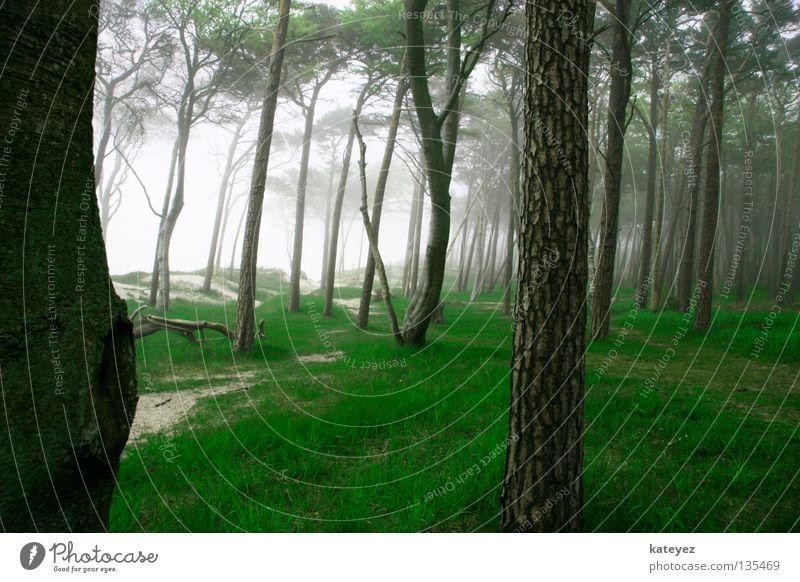 und wo ist Rotkäppchen? Natur Ferien & Urlaub & Reisen grün Baum Wald Frühling Gras Holz Deutschland träumen Nebel geschlossen Spaziergang Ostsee gruselig