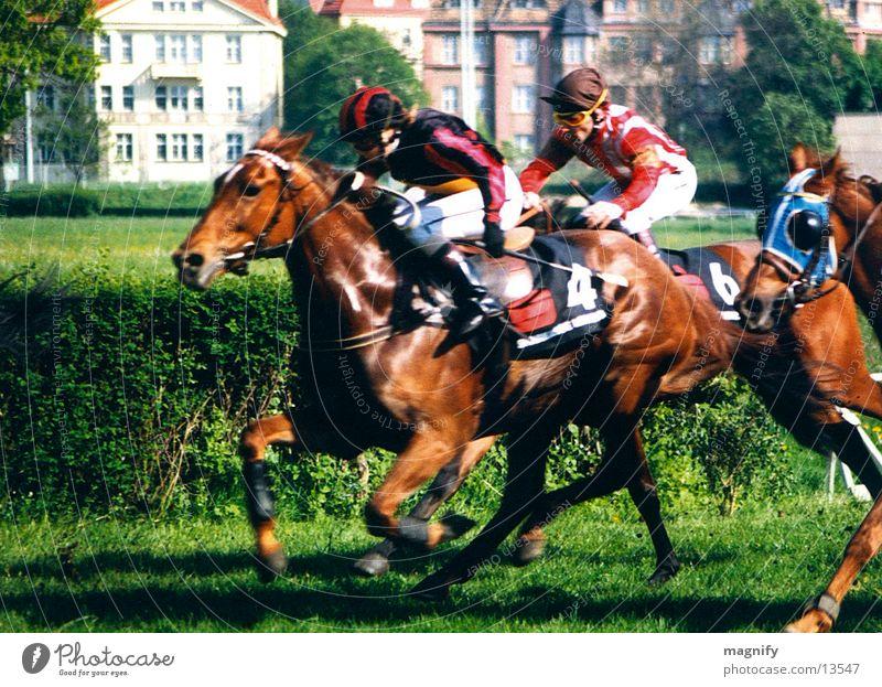 pferderennen Mann Tier Pferd Ziel Rennbahn Rennsport Reitsport Sport Pferderennen Galopprennen