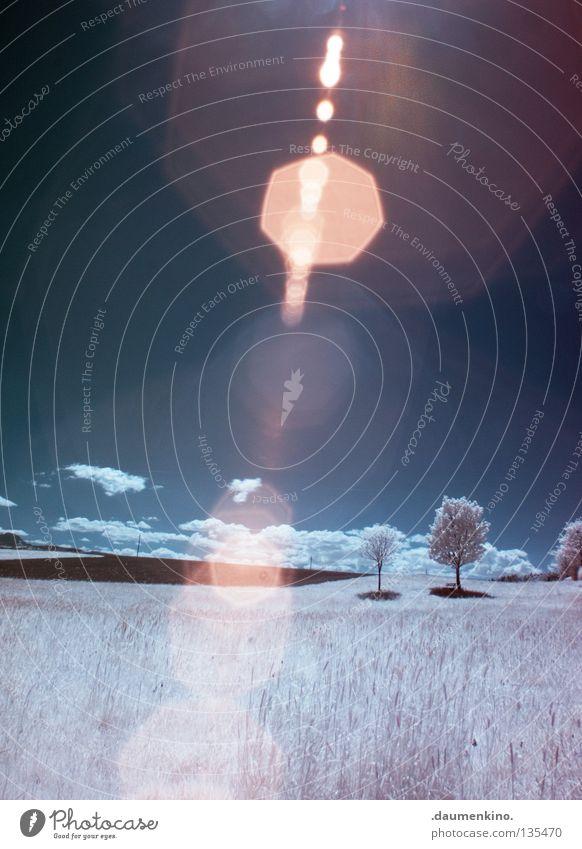 sky line Wiese Gras Baum Blatt Licht Personenzug Infrarotaufnahme fremd weiß Ferien & Urlaub & Reisen träumen ungewiss traumhaft Farbinfrarot außergewöhnlich