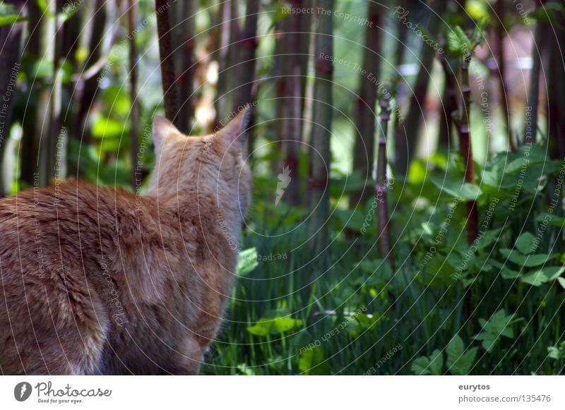 basic instinct Katze Sträucher Miau grün Jäger Blatt rothaarig intensiv Hauskatze Landraubtier Raubkatze Mörder Fell Schwanz Pfote Krallen ruhig Erholung lau