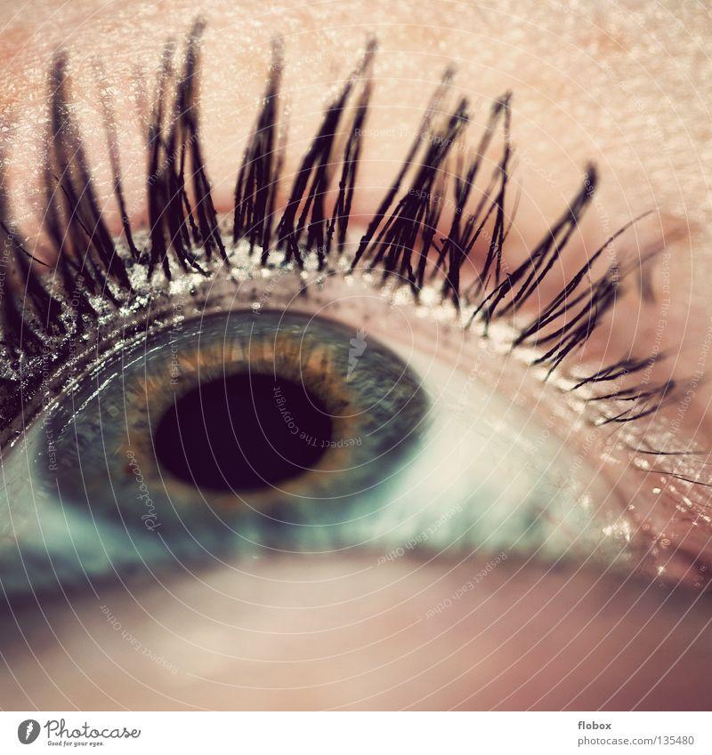 Blick hoch Pupille Wimpern Mensch Sinnesorgane Schminke geschminkt Wimperntusche Lidschatten Frau feminin schön Kosmetik betonen Kajal Jugendliche Makroaufnahme
