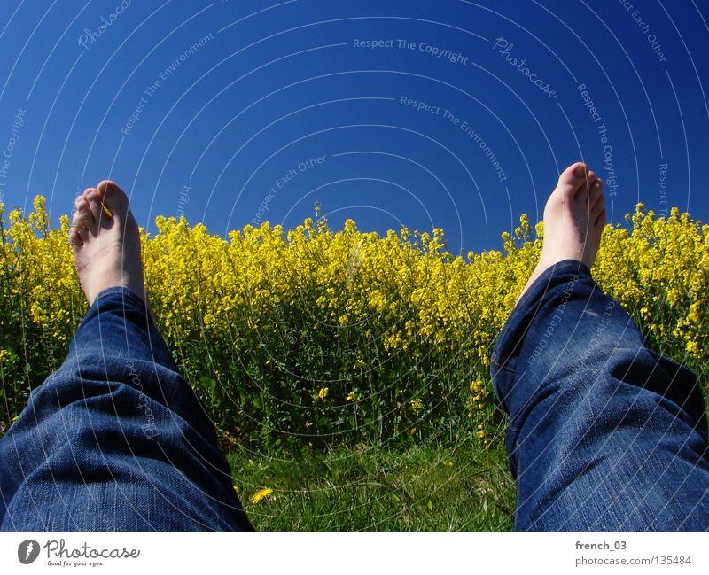 Just Raps III Himmel Natur blau weiß grün schön Pflanze Blume Farbe Einsamkeit ruhig Erholung Landschaft gelb Wiese Frühling