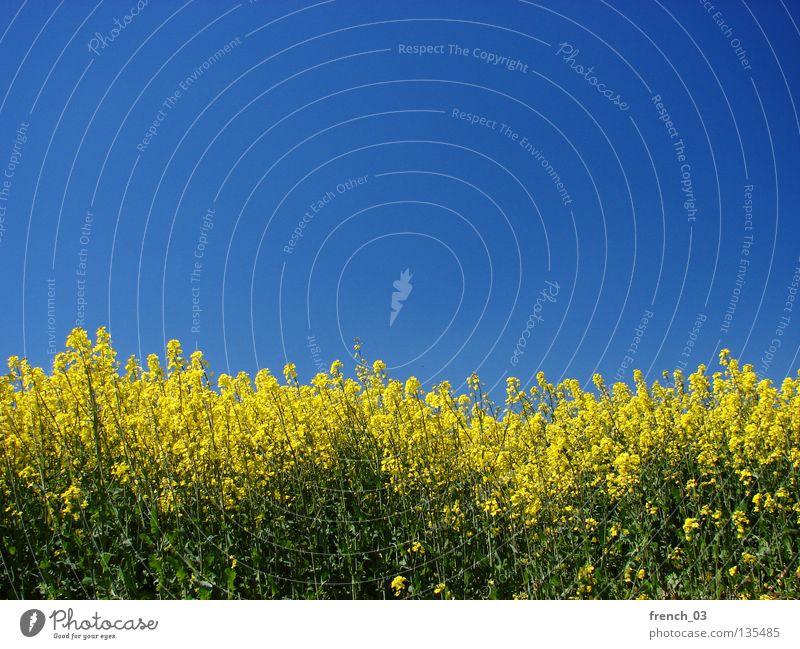 Just Raps II Himmel Natur blau grün schön Pflanze Blume Farbe Einsamkeit ruhig Erholung Ferne Landschaft gelb Frühling Freiheit