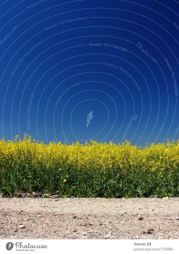 Just Raps I Himmel Natur blau grün schön Pflanze Blume Farbe Einsamkeit ruhig Erholung Landschaft gelb Frühling Wege & Pfade Freiheit