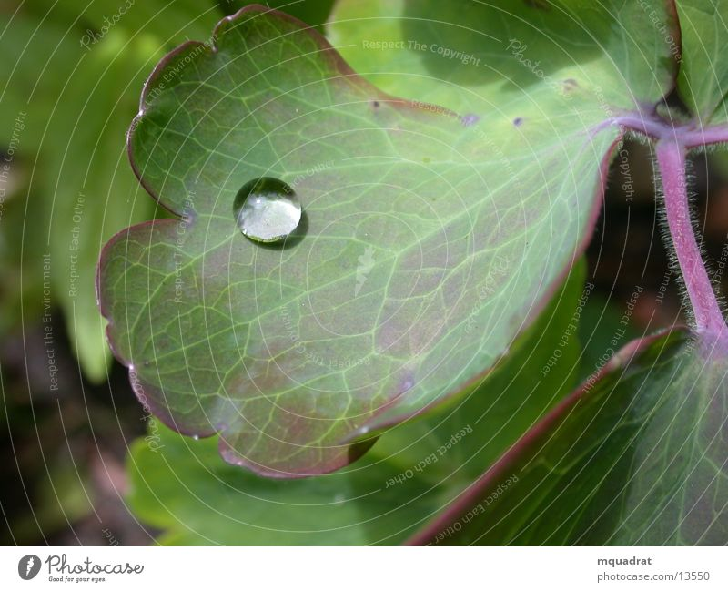 Tropfen_2 Wassertropfen Blatt grün Naur Makroaufnahme