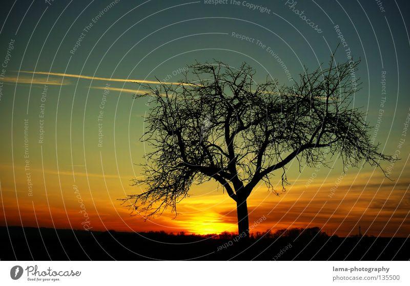 The Sunset Natur Himmel Baum Sonne Sommer Winter Lampe Leben Landschaft Graffiti Beleuchtung Hintergrundbild groß Wachstum Romantik Ast
