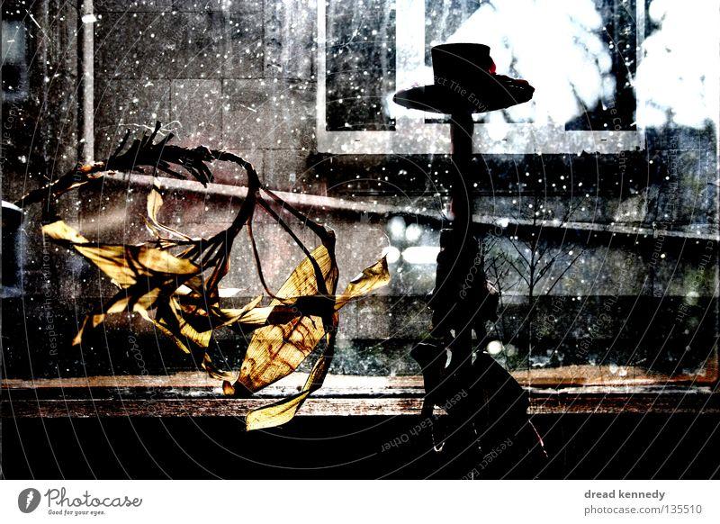 Silken Silence Pflanze ruhig Haus Einsamkeit Erholung Stil Fenster Zufriedenheit Wohnung Design Fassade Aussicht Dekoration & Verzierung Häusliches Leben Vergänglichkeit Idylle