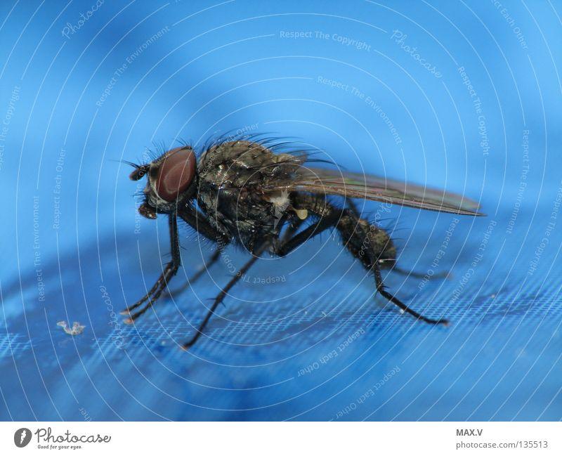 Brause-Pause Tier Insekt schwarz Facettenauge Fliege nah blau Biene Flügel Beine Haare & Frisuren